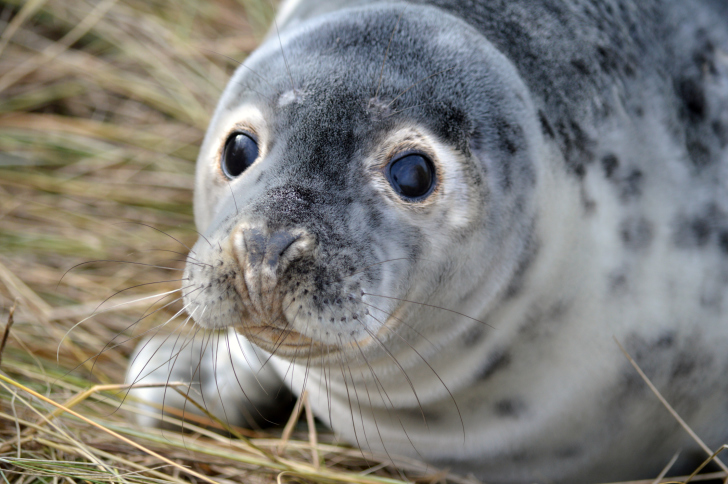 ThinkstockPhotos-534870683 NOAA Researchers Use UAS to Study Gray Seal Pups in Northeastern Waters