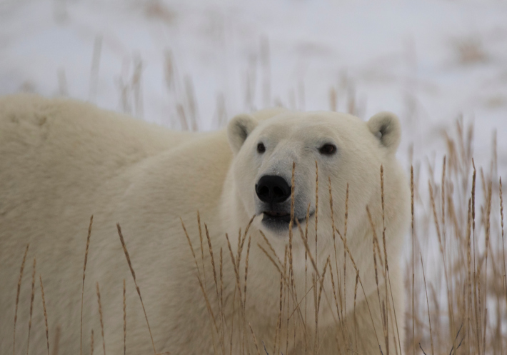 ThinkstockPhotos-509301330 Transport Canada Looks into UAS for Surveying Country's Arctic