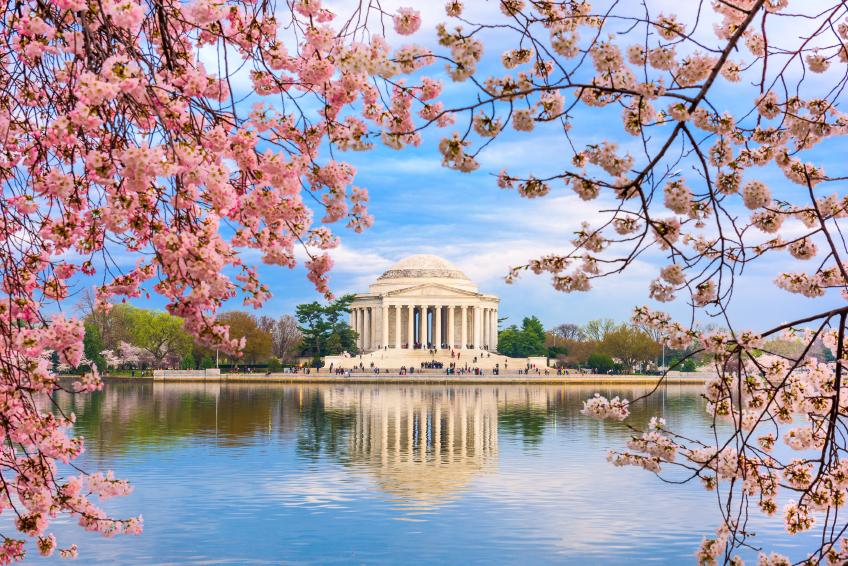 iStock_000083580413_Small FAA: No Drones at D.C.'s National Cherry Blossom Festival