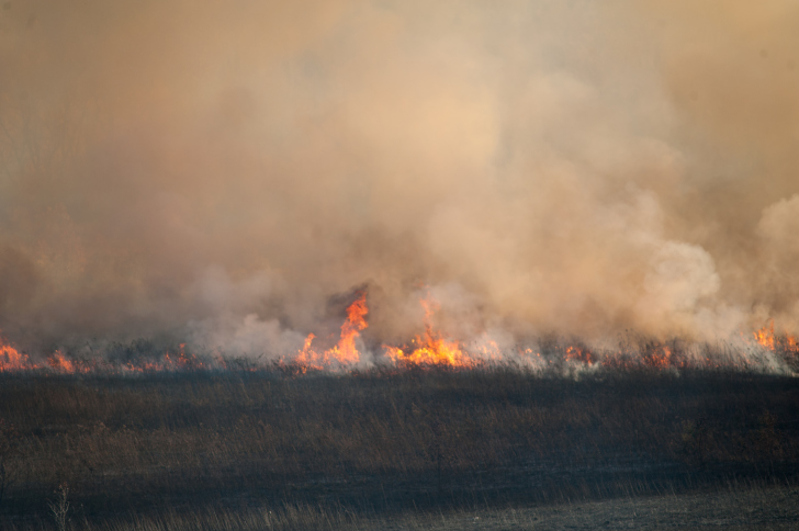 wildfireee UAS Monitor and Manage Forest Restoration After Wildfire