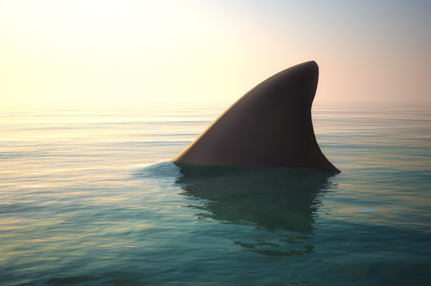 iStock_000065416993_Small UAVs Trialed for Shark Surveillance in Australian Waters