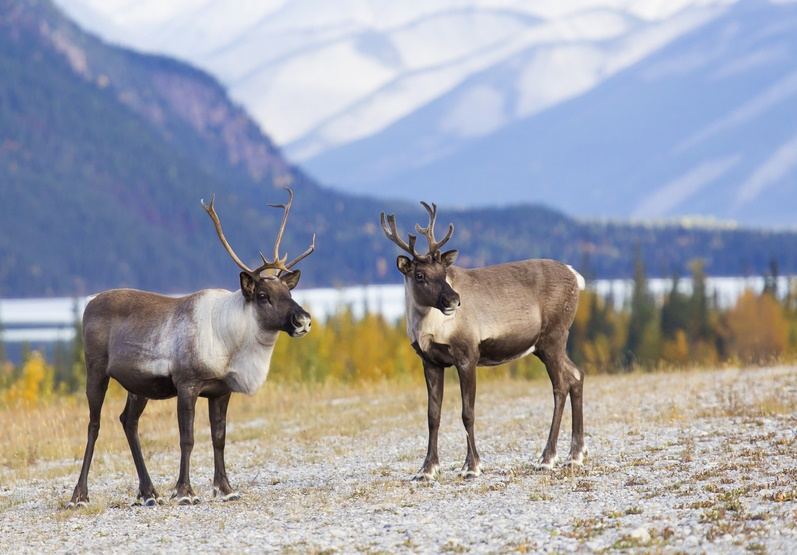 iStock_22501829_SMALL British Columbia Becomes Latest Province to Ban Drones in Hunting