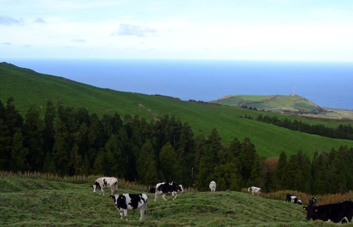 montana-cows Wanted: Unmanned Aircraft Services in Northwestern Montana