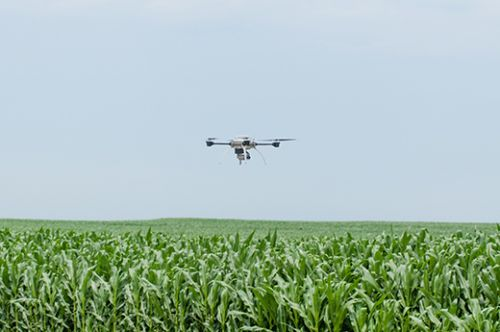 939_kstate_cornfield University Earns Statewide Access for UAS Research